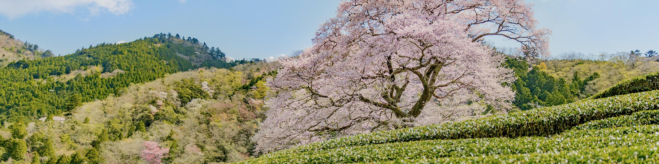 島田の気候・四季